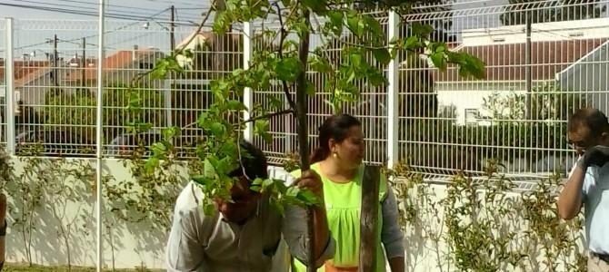 Dia da Árvore celebrado na Creche e Pré-Escolar da LAQC